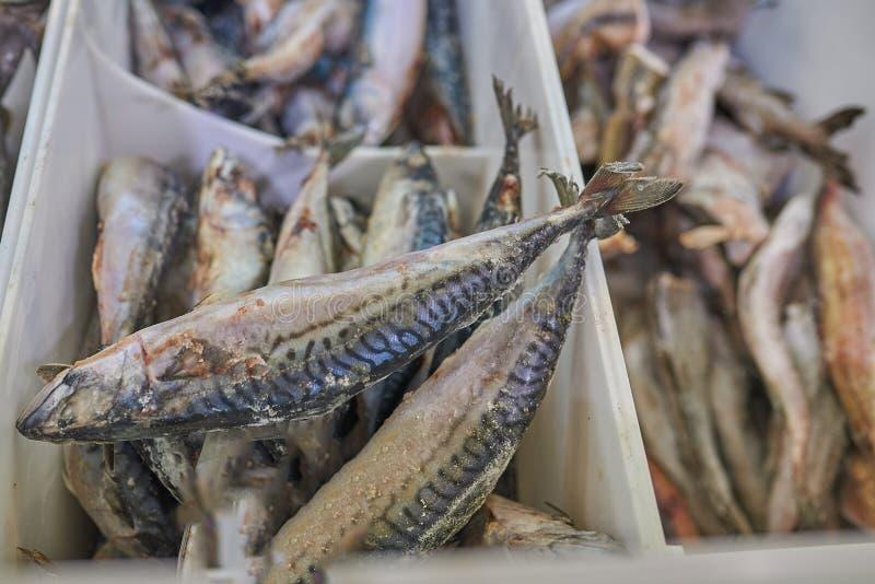 Zamarznięta makrela w supermarketa fridge zdjęcia royalty free