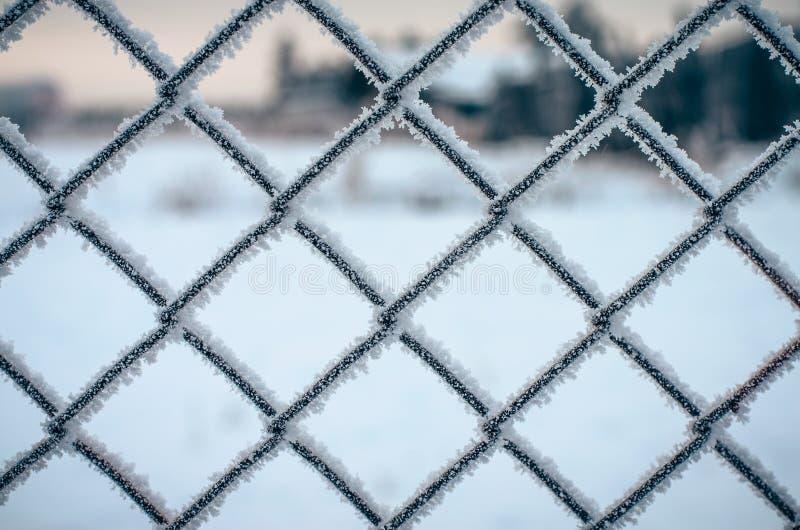 Zamarznięta metal sieć. obrazy stock
