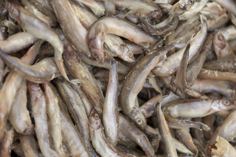 Zamarznięta ryba kłaść out równo jako tło fotografia royalty free