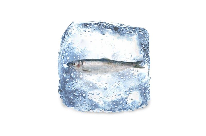 Zamarznięta ryba, lód zdjęcie stock