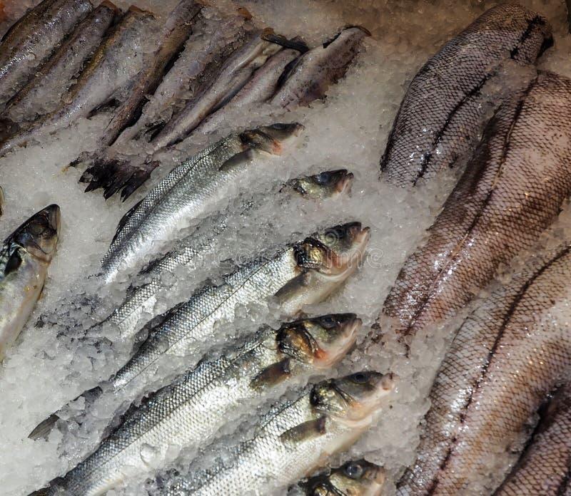 Zamarznięta ryba na lodzie zdjęcia royalty free
