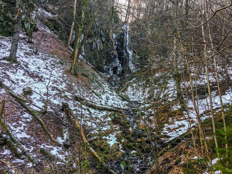 Zamarznięta siklawa z soplami lać się wodę w lasowym krajobrazie Wasserfall Niemcy i trochę zdjęcia royalty free