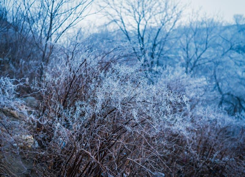 Zamarznięte gałąź. Zimy tło. Koloru stonowany wizerunek. obraz royalty free