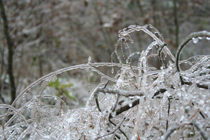 Zamarznięte krople woda w dzikiej naturze zdjęcie stock