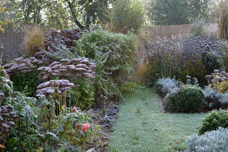 Zamarznięte rośliny w wczesnego poranku ogródzie obrazy stock