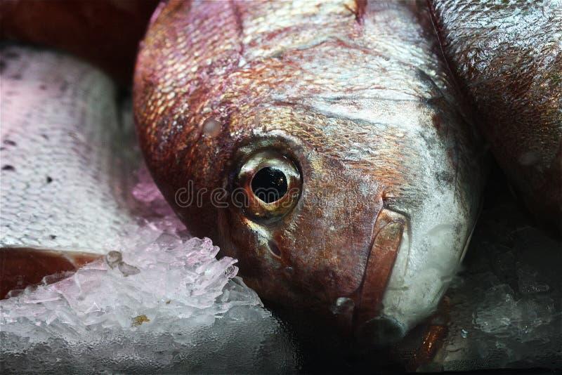 Zamarzniętego srebnego brązu scaly cała ryba na lodzie zdjęcia royalty free