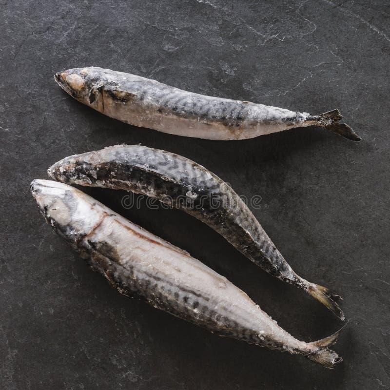 Zamarzniętej makreli rybi lub denny leszcz na łupku kamienia tle Owoce morza zdjęcie stock