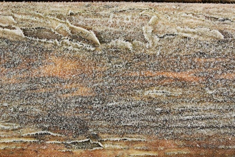 Zamarznięty drewno zdjęcie royalty free