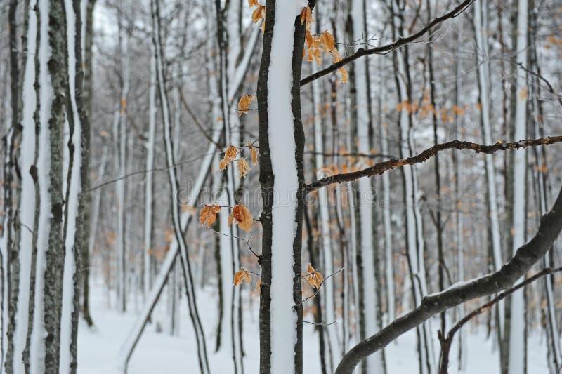 zamarznięty drzewo fotografia royalty free