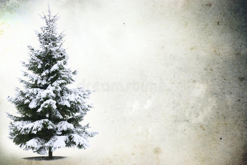 Zamarznięty drzewo w śnieżnym zdjęcia royalty free