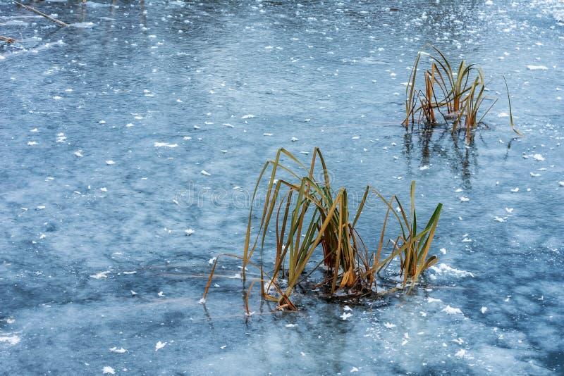 Zamarznięty jeziorny błękit Ostry niespodziewany zmniejszanie temperatura zdjęcie stock