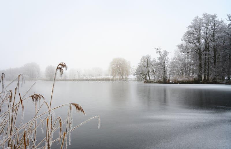 Zamarznięty jezioro z płochą i nagimi drzewami zakrywającymi hoar mrozem na a na zimnym mgłowym zima dniu, szarość krajobraz z ko fotografia stock