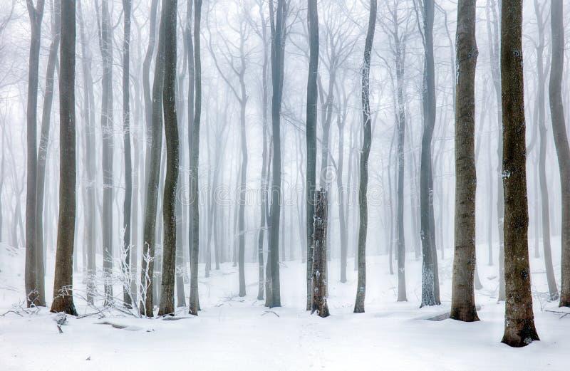Zamarznięty krajobraz - zimy mgły las obraz stock