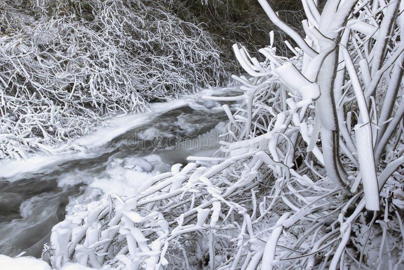 Zamarznięty lód i śnieg Wzdłuż spływanie strumienia obrazy royalty free
