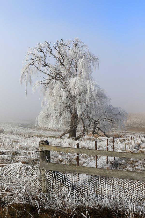 Zamarznięty lód zakrywał drzewa w zimie z ogrodzeniem i tło mgłą obrazy stock