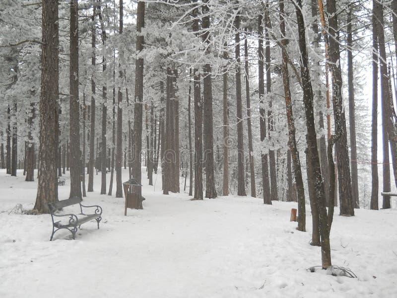Zamarznięty las z lodową i śnieżną biżuterią zdjęcia royalty free