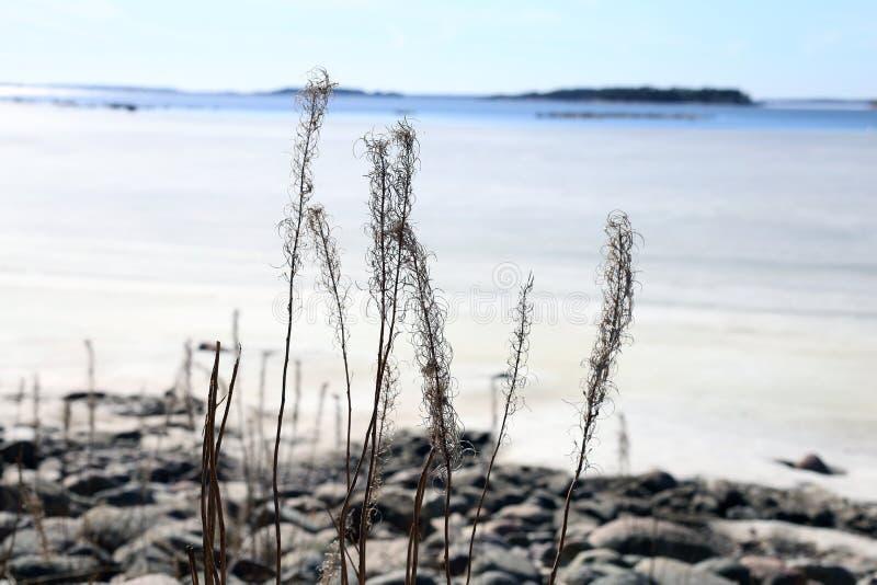 Zamarznięty morze bałtyckie Fotografujący w Espoo, Finlandia podczas Pogodnego wiosna dnia obraz stock