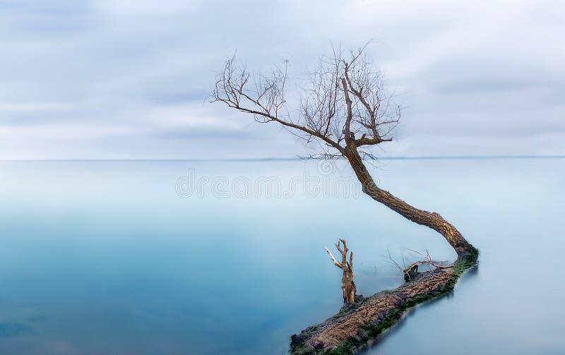 Zamarznięty morze z jeden osamotnionym drzewem - cichy calmness zdjęcie stock