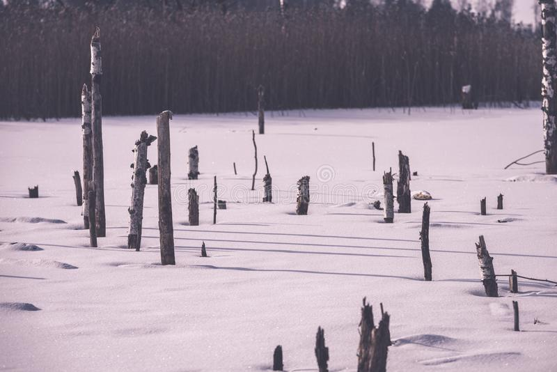 zamarznięty nagi suszy i nieżywi lasowi drzewa w śnieżnym krajobrazie - vint obraz stock