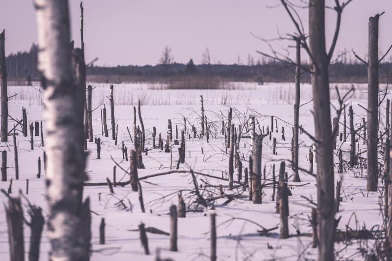 zamarznięty nagi suszy i nieżywi lasowi drzewa w śnieżnym krajobrazie - vint obrazy stock