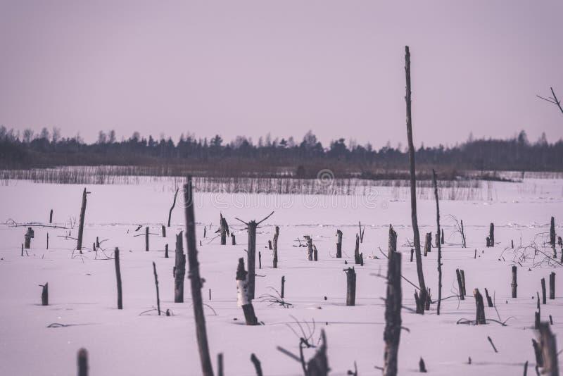 zamarznięty nagi suszy i nieżywi lasowi drzewa w śnieżnym krajobrazie - vint fotografia royalty free