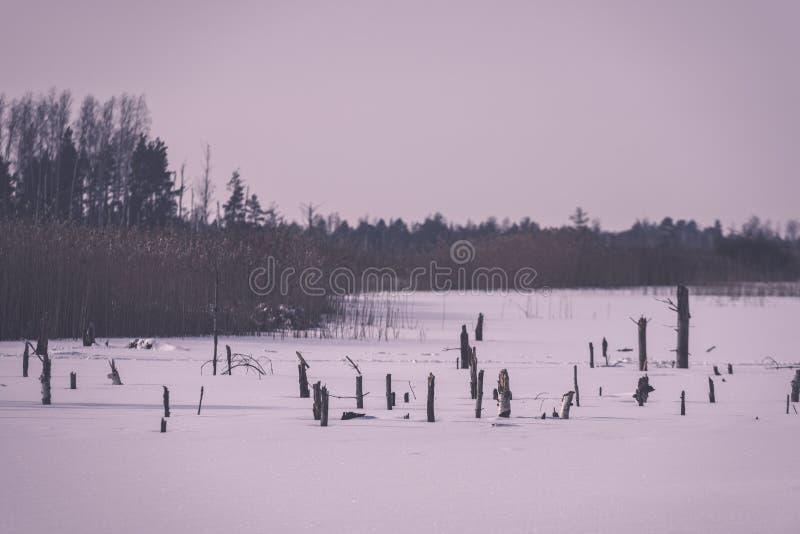zamarznięty nagi suszy i nieżywi lasowi drzewa w śnieżnym krajobrazie - vint fotografia stock