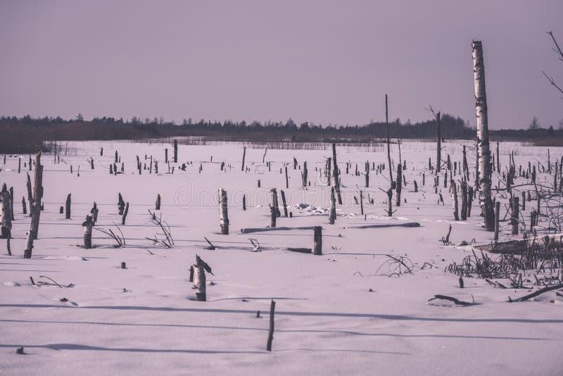 zamarznięty nagi suszy i nieżywi lasowi drzewa w śnieżnym krajobrazie - vint obrazy royalty free