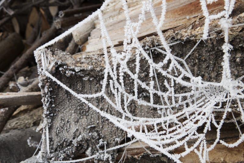 Zamarznięty pajęczyny zrozumienie przed belami zdjęcia royalty free