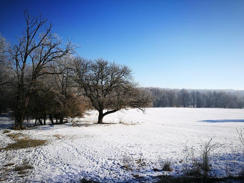 Zamarznięty pole pod śnieżną pokrywą zdjęcia stock