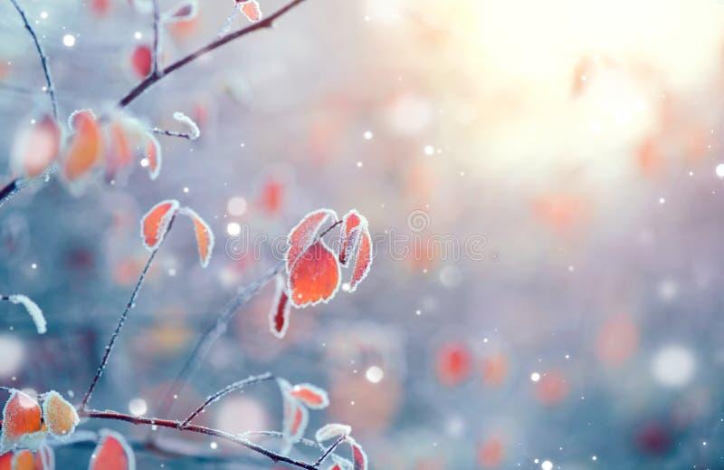 Zamarznięty zimy natury tło zdjęcia royalty free