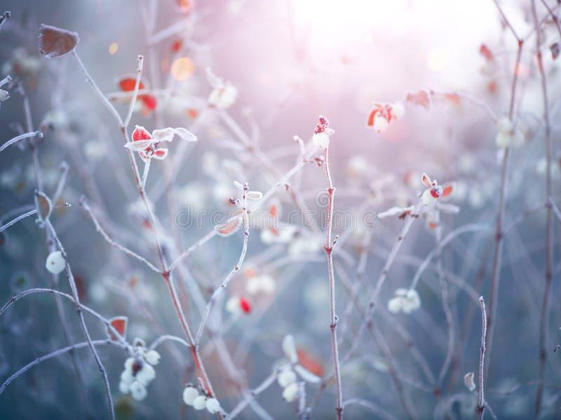 Zamarznięty zimy natury tło obrazy stock