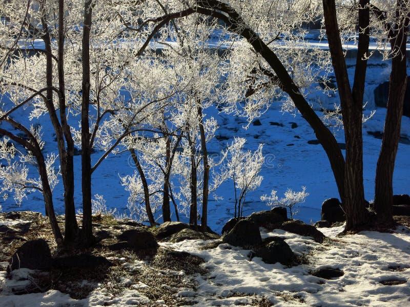 Zamarzniętych drzew tła zimy Błękitny zimno fotografia royalty free