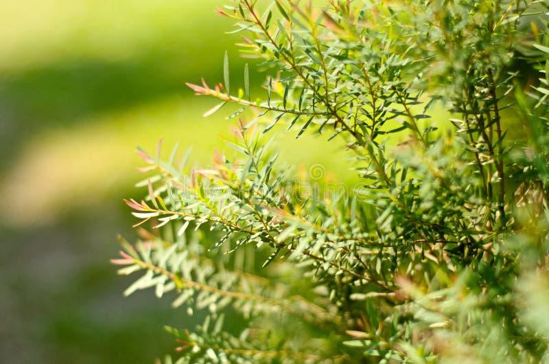Zamazana ostrość zielony liść i drzewa na ślicznym podwórko w słonecznym dniu zdjęcie royalty free