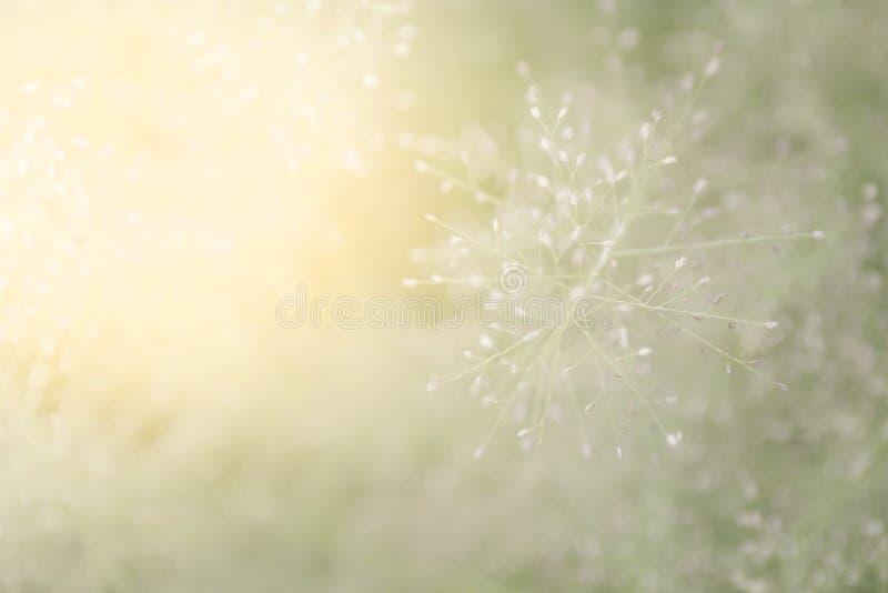 Zamazana trawy natura, miękka trawa kwitnie świeżego dla tła, małej trawy łąkowa plama w słońca światła ranku dniu, naturalny kwi obrazy stock