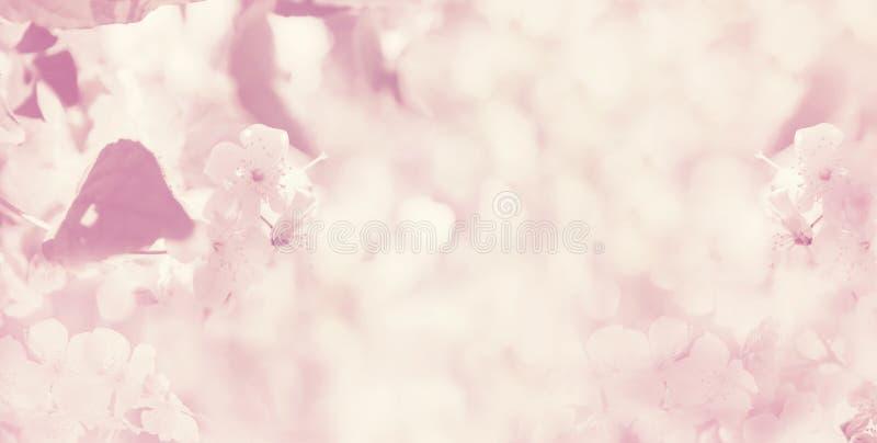 Zamazanej wiosny kwiecisty tło, sztandar zdjęcia royalty free