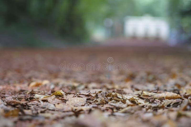 Zamazany jesieni tło zdjęcia stock