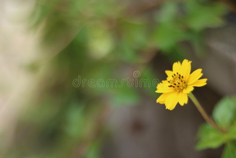 Zamazany kwiat w porze deszczowa obraz royalty free