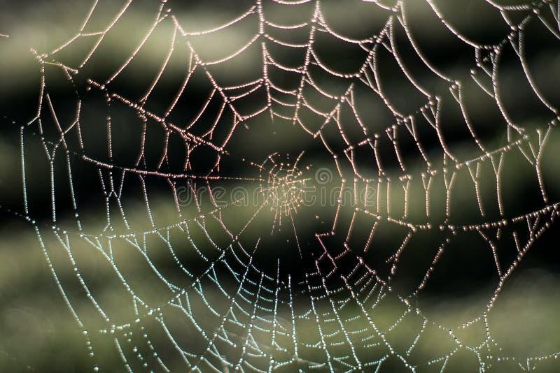 Zamazany spiderweb z Podeszczowymi kropelkami woda Pajęczyna w rosy dr fotografia royalty free