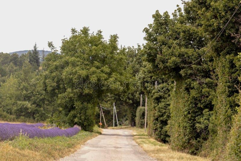 Zamazany tło z małą wsi drogą gruntową wzdłuż purpurowego lawendy pola w Provence wiosce, Francja obrazy stock