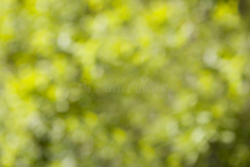 Zamazany wizerunek miękkiej części zieleni bokeh tło obraz stock