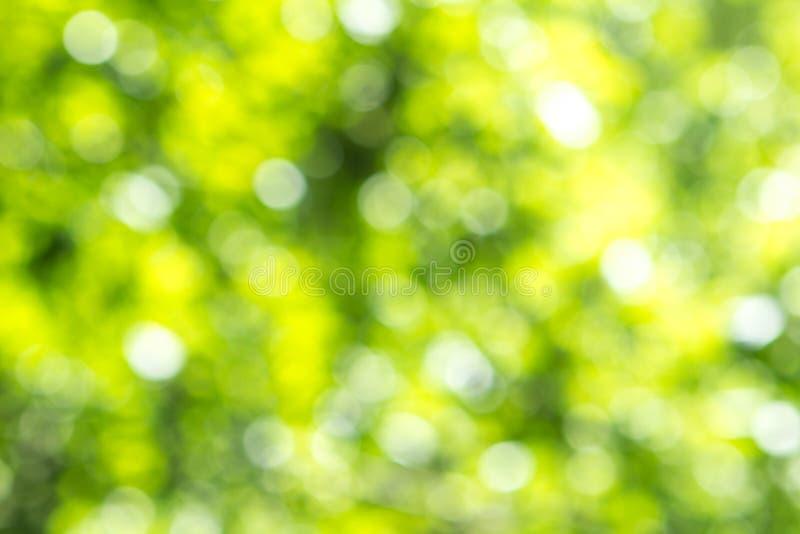 Zamazany zielony drzewny liścia tło z bokeh, natury tekstura obrazy royalty free