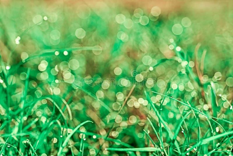 zamazuje trawy, rosy kropli spadek na i zdjęcia stock