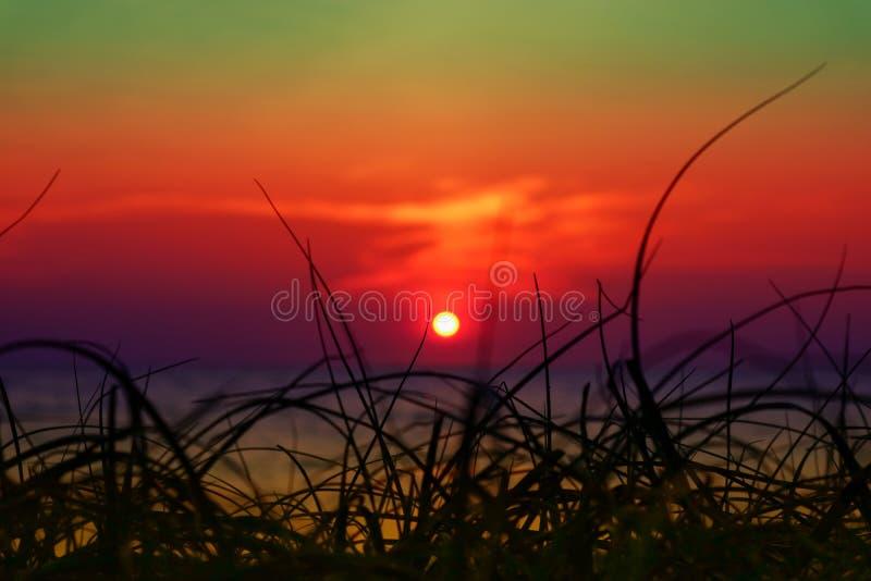 zamazuje zmierzch na morza i sylwetki trawie na plażowy kolorowym lub zdjęcie royalty free