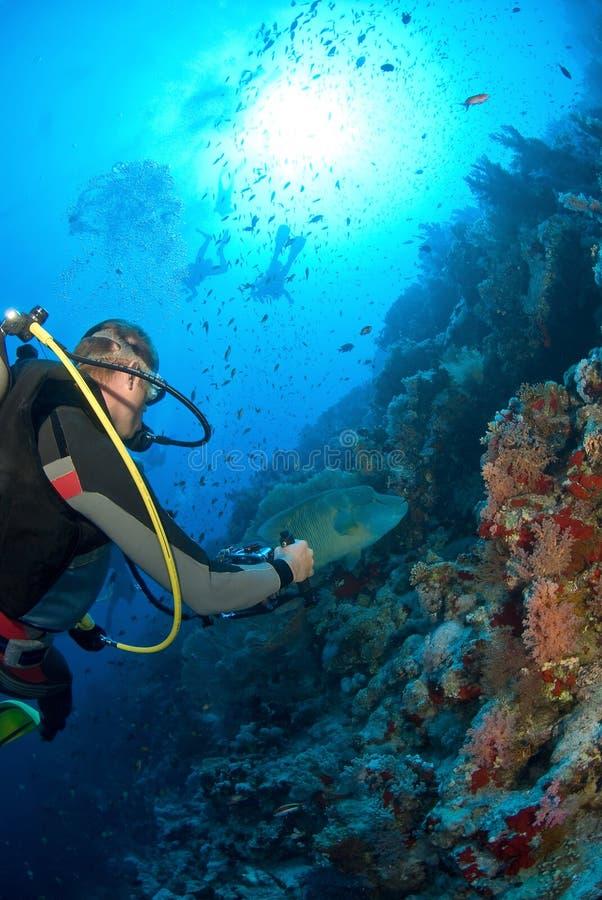 Zambullidor con los pescados fotografía de archivo
