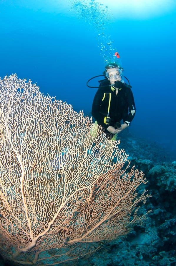Zambullidor de equipo de submarinismo con el coral gigante del ventilador imágenes de archivo libres de regalías