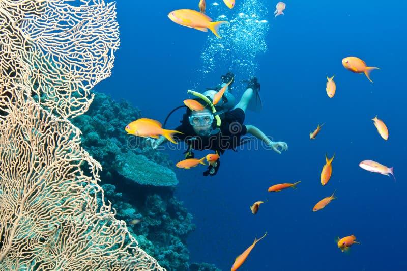 Zambullidor de equipo de submarinismo con los pescados y el coral foto de archivo