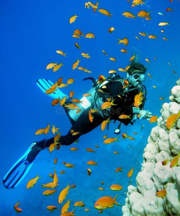 Zambullidor de equipo de submarinismo de la mujer foto de archivo libre de regalías