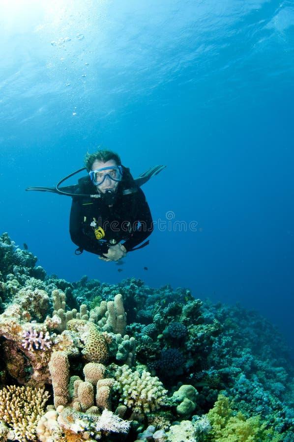 Zambullidor de equipo de submarinismo en el filón coralino foto de archivo