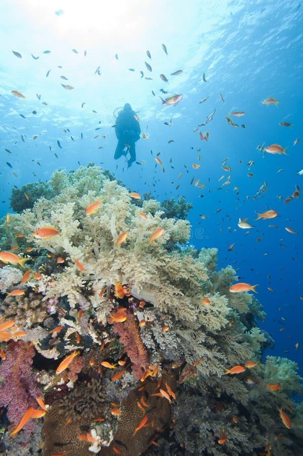 Zambullidor de equipo de submarinismo en un filón tropical fotografía de archivo libre de regalías