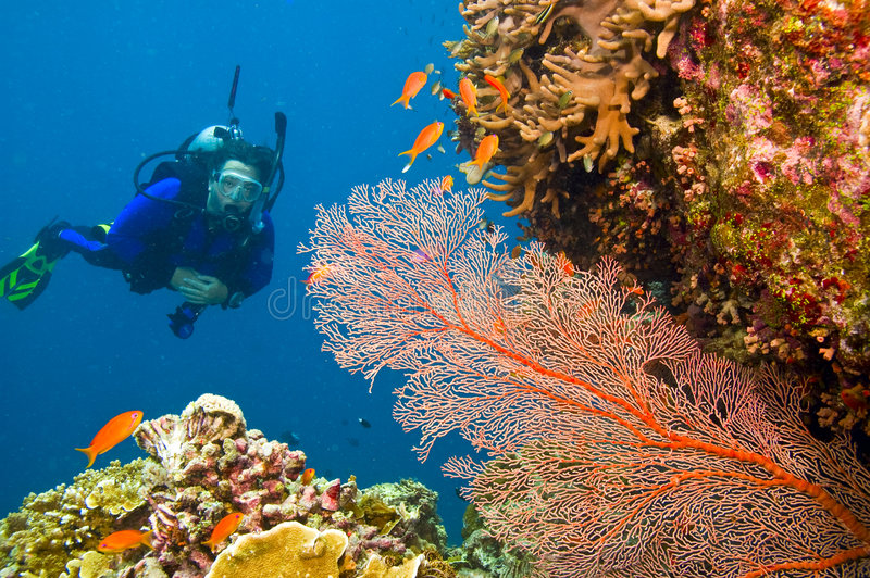 Zambullidor de equipo de submarinismo femenino que ve el ventilador de mar gorgonian foto de archivo libre de regalías